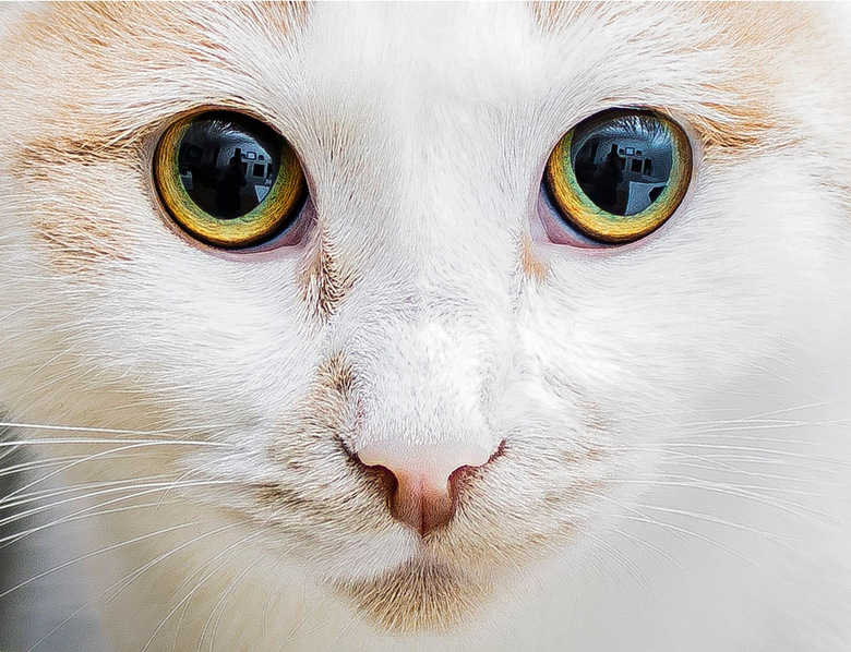 The eyes of a cat - The eyes of a cat<br />