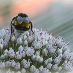 bee-food
