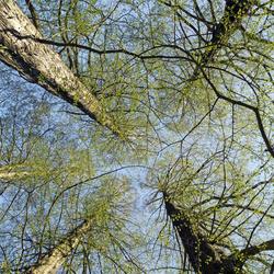 bomen-architectuur