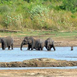 Olifanten en krokodillen in Sri Lanka