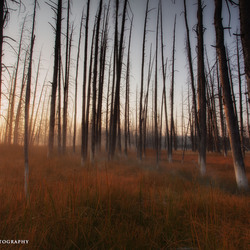 Deadtree sunrise part III