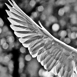 Wing of an angel