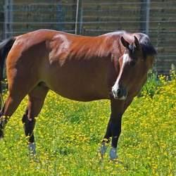 paard aan het genieten van de zon