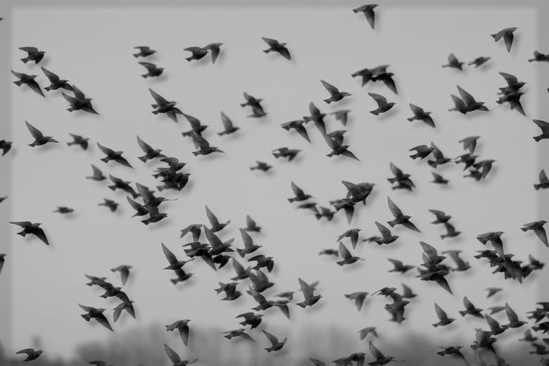 Vliegen, vliegen en nog meer vliegen