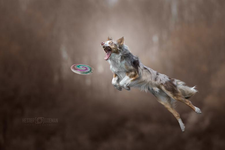 """Catch!! - Supergave workshop gehad bij Claudio Piccoli """"dog's in action 2.0. Heel veel geleerd, en veel gave foto's gemaakt."""