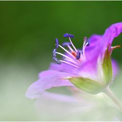 Rising flower