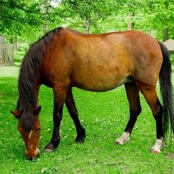 Paard (II)