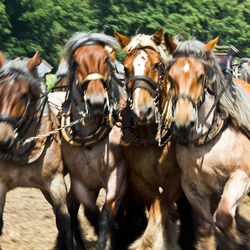 paarden.jpg