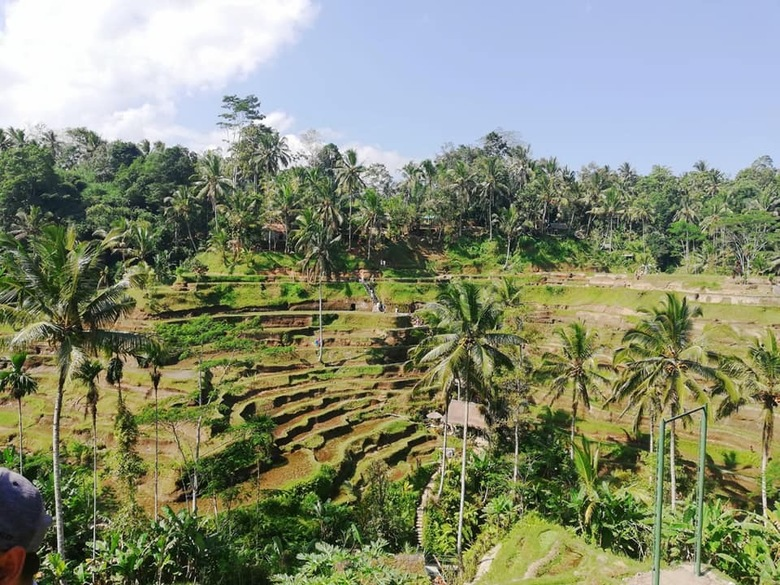 Rijstvelden in Indonesië -