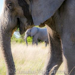 Creatief met olifanten