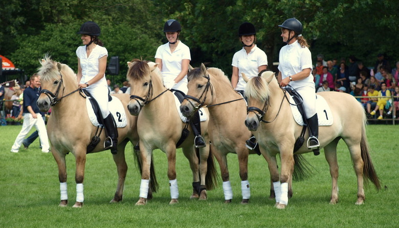 WINNING TEAM PAARDENVOETBAL - Dag van Mens en Dier.<br /> Demo van het Paardenvoetbal door Het Fjordenpaardenstamboek.