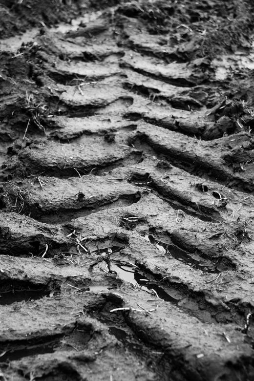 Tracks - Sporen in het natte land