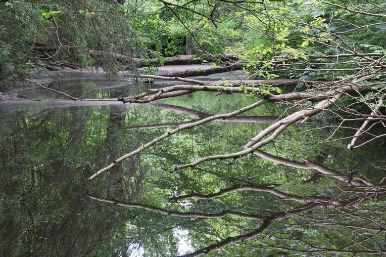 Hocuspocus - Bomen in het Voorsterbos, Wat is boven wat is onder? Raken ze het water? <br /> Na jaren gebruikt te zijn voor het Waterlooplaboratorium