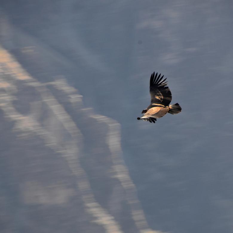 Cruz del Condor1.jpg - Cruz del Condor1.jpg