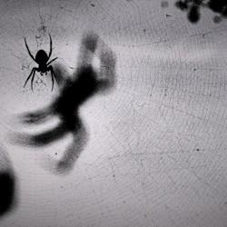 spookweb