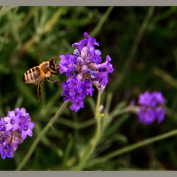 Insekten 2