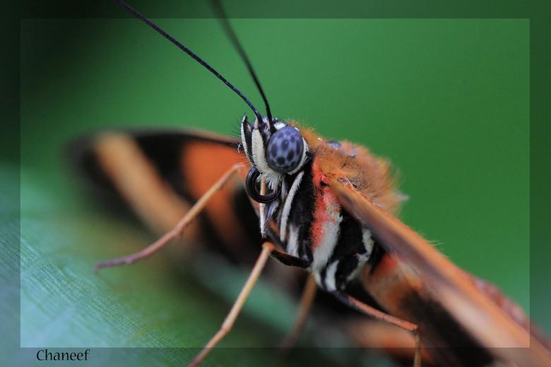kloos up vlinder - deze mooie vlinder heb ik gemaakt in Artis. ik had eindelijk een macro lens en deze moest ik natuurlijk uitproberen wat ik ook wel