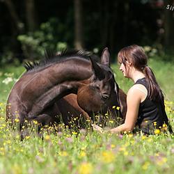 Liggend paard met baasje