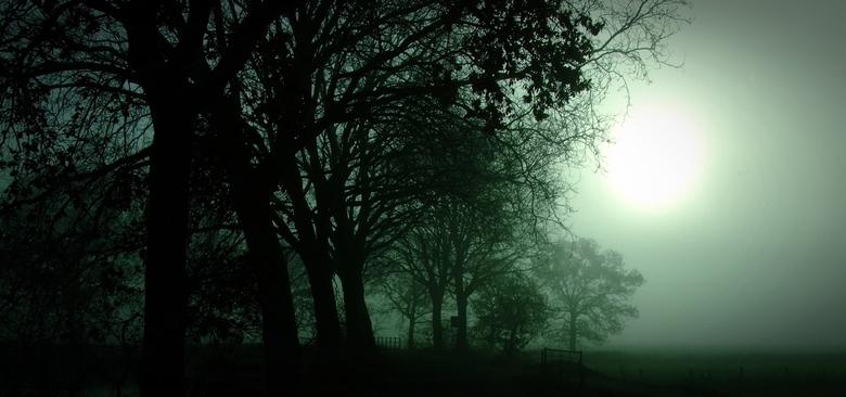 Winterlicht en mist - Silhouet van bomen langs de weg