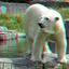Polar-bear Blijdorp Zoo Rotterdam 3D