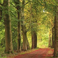 Lijnen in het bos