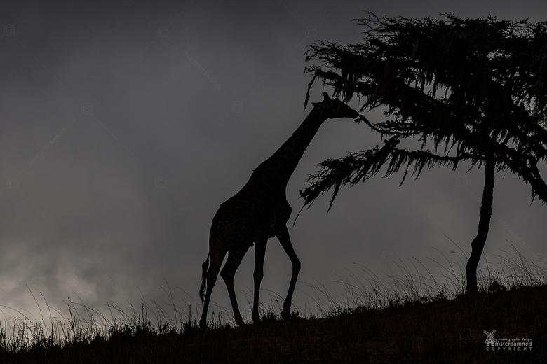 Ngorongoro Crater in Tanzania - Om 05.30 uur opstaan voor de safari naar de Ngorongoro Crater in Tanzania. Het is donker en de krater zit zo vroeg nog