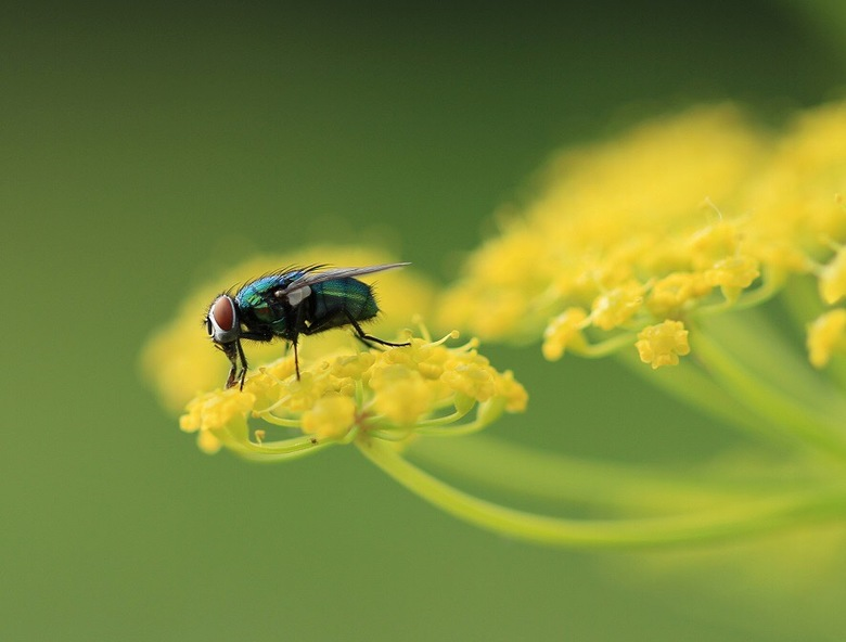 Between the yellow flower  -