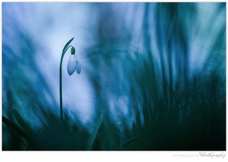 Snowdrop blues