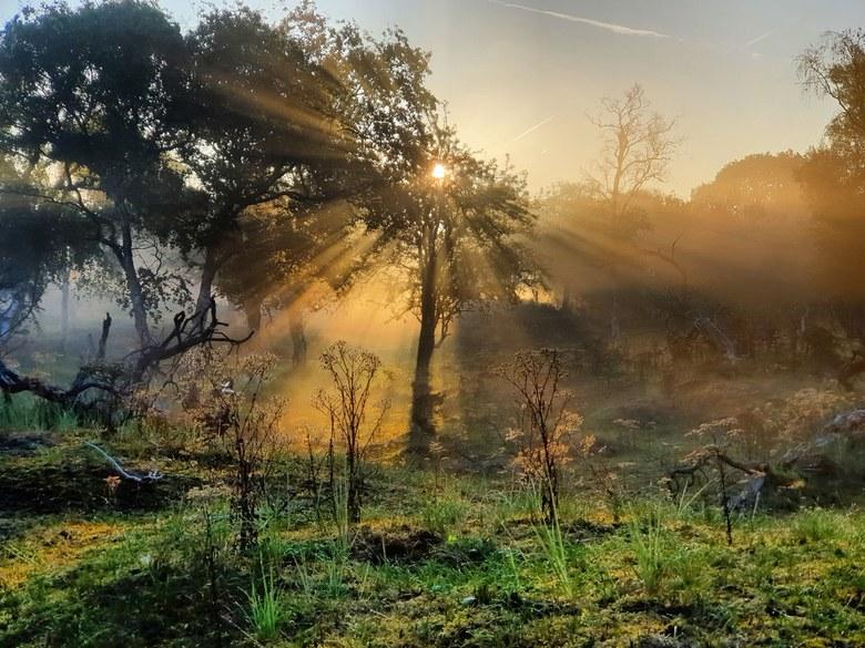 AWD, de eerste zonnestralen laten zich zien.  - Een koude mistige ochtend wat na enkel een paar uur verandert in een warme zomerdag. <br /> De eerste