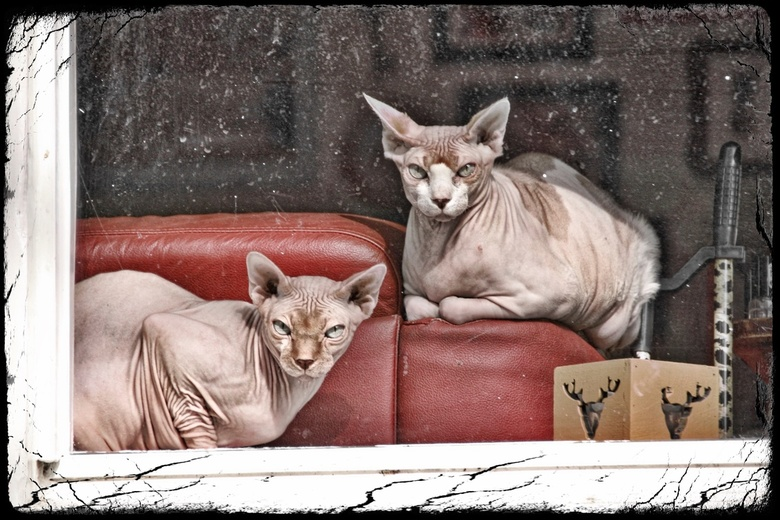I thought I see a poesy cat ... - Even vergroot zien ...I thought I see a poesy cat <br /> <br /> In eerst instantie dacht ik aan twee beelden...tot