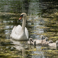 Mama met de kids