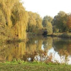 Herfst Park De Nieuweling 1