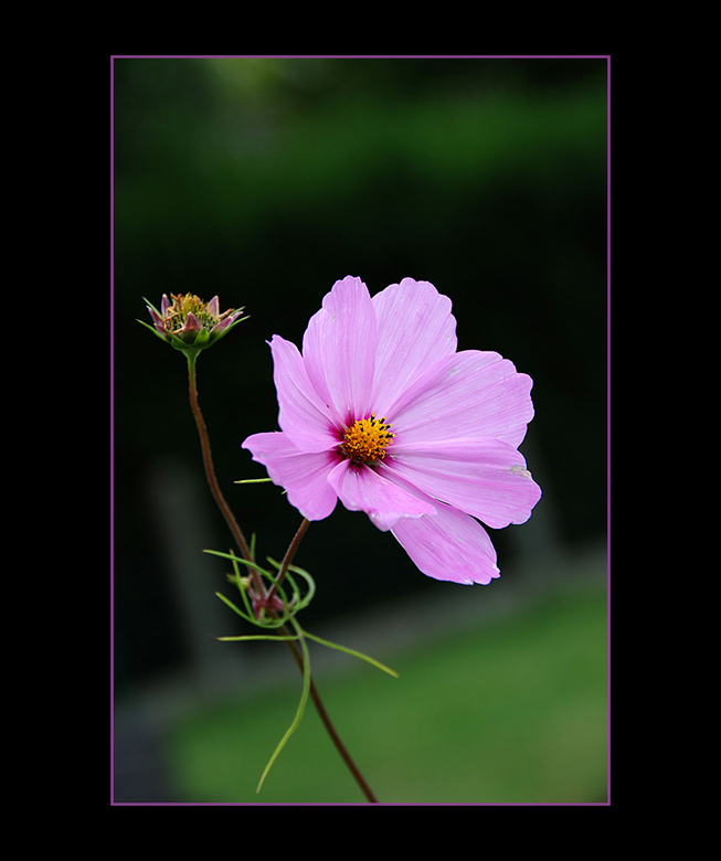 Pink Ribbon 8 - De laatste, om de 1000 te halen.<br /> Eenieder die reageerde bij mijn vorige pink-ribbon foto van vandaag: dankuwel. Een  waardevoll