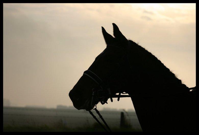 paard tegenlicht -