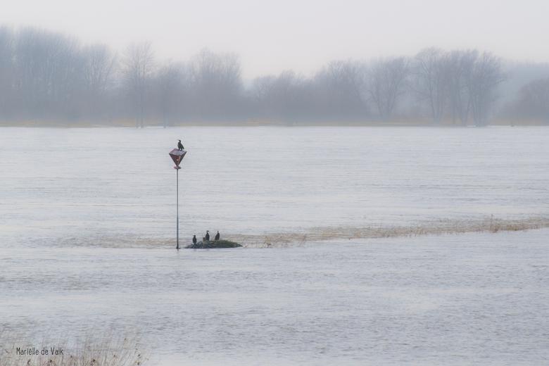 Op het droge - Het water aan de Merwede is al weer een stuk gedaald. Desondanks hebben deze aalscholvers het moeilijk om een plekje op het droge te vi