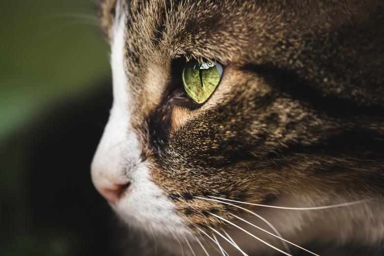 Kattenoog - Katten ogen vind ik zo mooi, het zijn net edelstenen.