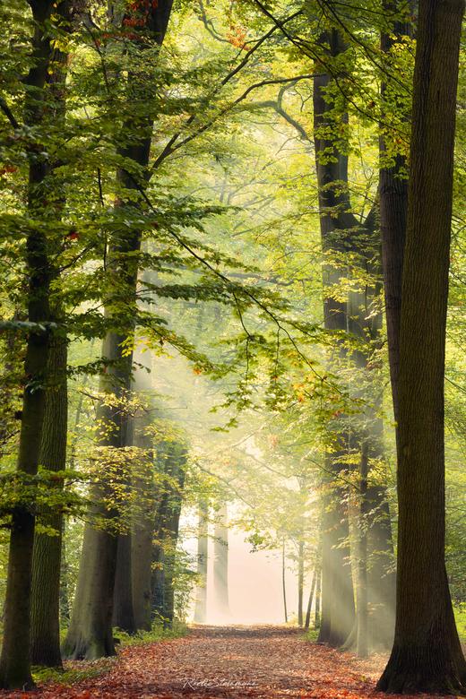 The learning path - Zo voorzichtig aan beginnen de bladeren te verkleuren en ook dat is weer een heerlijke periode die aanbreekt om te fotograferen. <
