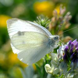 een witje met kleur.. :D