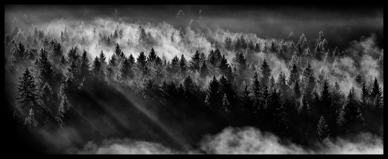 Forest  - Verdampende rijp in een bos nabij Rangersdorf,Oostenrijk. Dit schouwspel duurde slechts een kleine 10 minuten, toen ging de zon verscholen a
