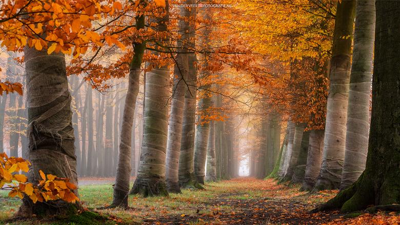 """Autumn - Optimale herfst omstandigheden nabij Paleis het Loo deze morgen.<br /> <br /> Groeten Frederik<br /> Volg <a href=""""http://www.vanderveerfo"""