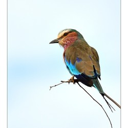 Colourful Birdy