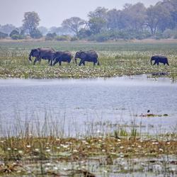 Botswana 38