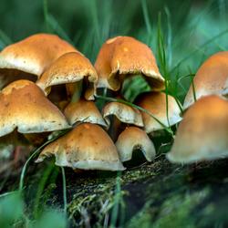 Herfst in Nedeland II