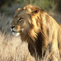 Koning der dieren voor Koningsdag