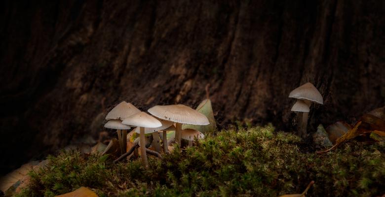 Beautiful fungi - Een mooie macro. Genomen in park Leyduin bij Vogelenzang