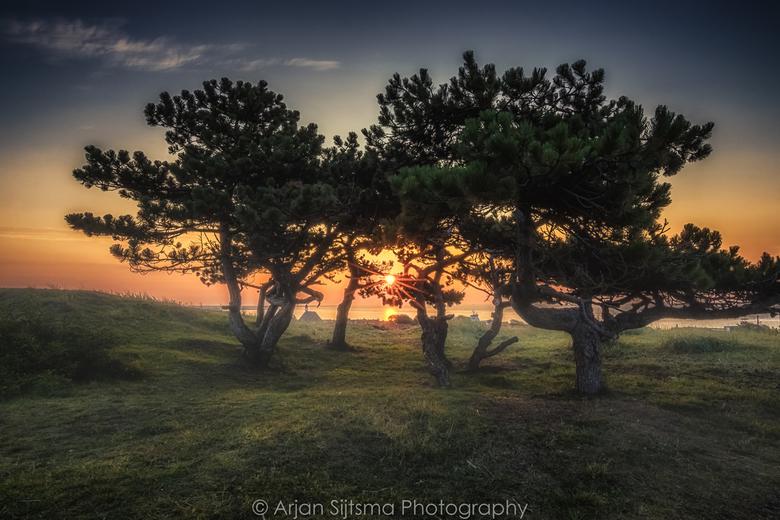 Mooie bomen in de ochtend zon