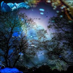 de nacht is mooi..............