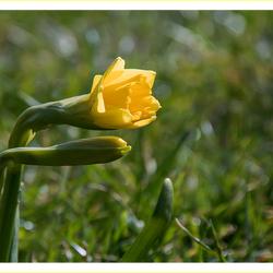 Lente 4