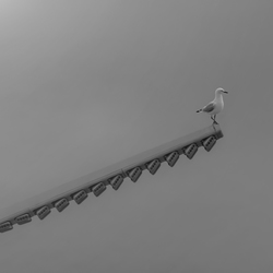 SEAGULL ON TOP