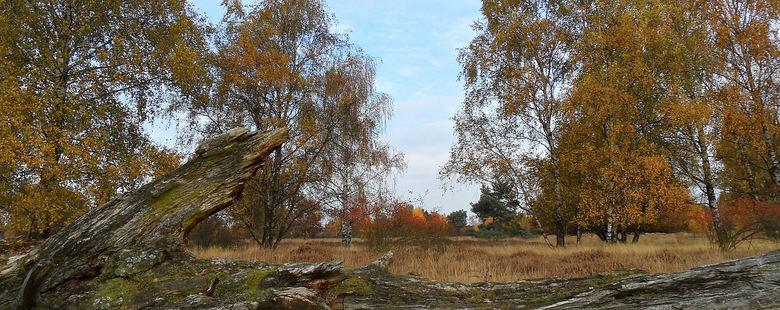 Afscheid! - De meteorologische winter is begonnen en hebben we de kleurrijke herfst achtergelaten.